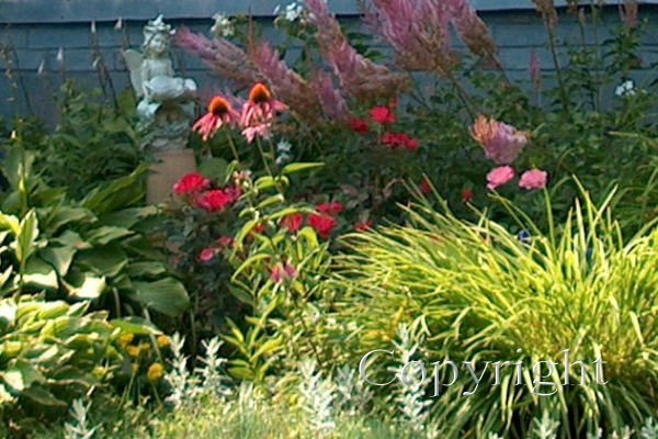 Foundation Perennials