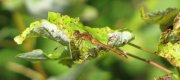 View the Album: Dragonflies and Lacewings  24 images(s)