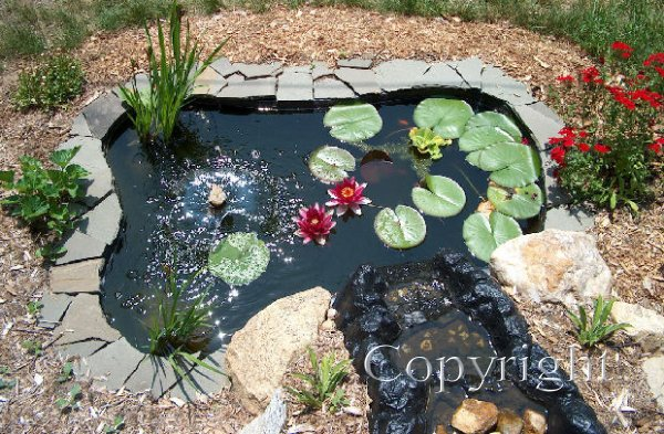 Pond Overview